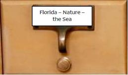 Florida Nature the Sea Page